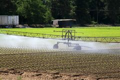 Intensive irrigation in vegetable field in summer Royalty Free Stock Images