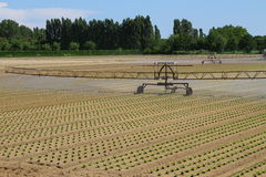 Intensive irrigation in vegetable field in summer Royalty Free Stock Photography