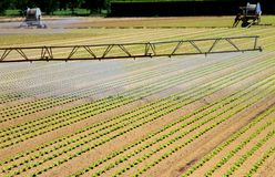 Intensive irrigation in vegetable field in summer Stock Photography