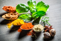 Intensive spices and herbs on old table Stock Photography
