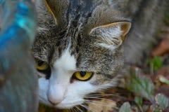 INTENSIVES SPIEL CAT-GESICHT Lizenzfreie Stockfotos