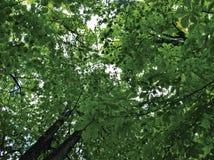 Intenso Verde Стоковые Фотографии RF