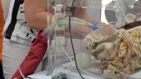 Intensywna opieka lekarz łączy oddychanie tubki przedwczesny dziecko w inkubatorze, przygotowywa dla deportowany nowonarodzony b zbiory wideo