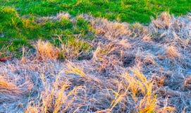 Intensywny Jaskrawy i - zielona trawa Kąpać w zmierzchu świetle Prawie obraz royalty free