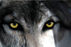 Intensywny spojrzenie od wilczego ` s ono przygląda się royalty ilustracja