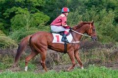 Intento fallido de los caballos que compiten con que comienzan una raza Foto de archivo