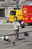 Intentos jovenes del muchacho para coger palomas Imagenes de archivo