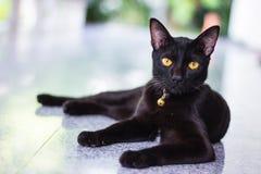Interés masculino negro de la demostración del gato en la cámara de la foto Imagen de archivo