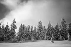 Inter Lasowej krater góry krajobrazu Jeziornej Śnieżnej fotografii Oregon północnego zachodu góry Pacyficzni drzewa Fotografia Royalty Free