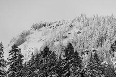 Inter Lasowej krater góry krajobrazu Jeziornej Śnieżnej fotografii Oregon północnego zachodu góry Pacyficzni drzewa Zdjęcie Stock