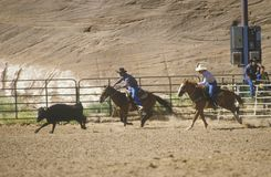 Inter-Tribal Ceremonial Indian Rodeo Royalty Free Stock Images