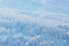 Inter vacation background texture with pine trees covered by heavy snow. Texture winter mountain vacation panoramic background with pine trees covered by heavy Royalty Free Stock Photo