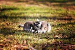 Interação secreta dos animais do jardim zoológico colorida Imagens de Stock Royalty Free