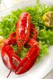 Intera aragosta con insalata Immagini Stock