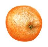 Intera arancia matura Fotografia Stock