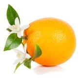 Arancia e fiore Immagine Stock
