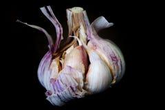 Intera metà dell'aglio aperta Fotografie Stock