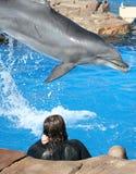 Interaction de dauphin images stock