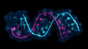 interazione MiRNA-mRNA Immagine Stock Libera da Diritti