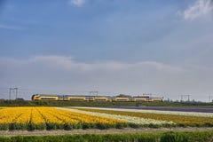 Intercity οδήγηση τραίνων δίπλα στον τομέα λουλουδιών στις Κάτω Χώρες στοκ φωτογραφίες με δικαίωμα ελεύθερης χρήσης