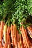 Intere carote organiche fresche Immagini Stock