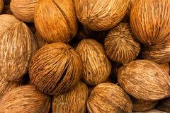 Intere noci di cocco Immagine Stock