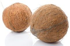 Intere noci di cocco Immagine Stock Libera da Diritti