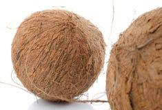 Intere noci di cocco Immagini Stock Libere da Diritti