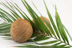 Intere noci di cocco sulle foglie della noce di cocco su bianco Immagine Stock