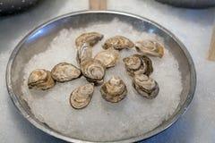 Intere ostriche fresche in Shell su ghiaccio Immagine Stock