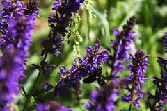 Interessant insect op purpere bloemen stock foto