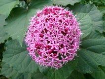 Interessante roze bloem met groene bladeren Stock Afbeelding