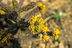 Interessante Spezies des botanischen Gartens des Kaktus in Prag lizenzfreies stockfoto