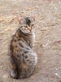 Interessante und schöne Katze stellt passendes für Anzeigen und Designe dar Lizenzfreie Stockfotografie