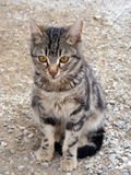 Interessante und schöne Katze stellt passendes für Anzeigen und Designe dar Stockfoto