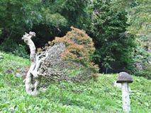 Interessante vorm van boom Stock Foto