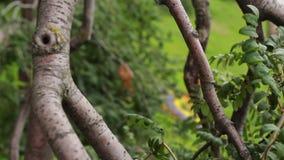 Interessanter Baum, der unten wächst stock footage