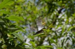 Interessantes Insekt Lizenzfreie Stockfotos