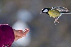Interesse für Vogel Lizenzfreie Stockfotos