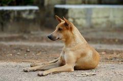 Interessierter Hund, der seine Ohren anhebt Stockbild