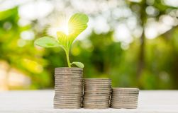 Interest money finance Plant In Savings Concept