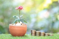 Interest rate up and Banking concept, Plant growing on stack of coins money in flowerpots on green background, investment and. Business concept royalty free stock photos