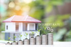 Interest rate up and Banking concept, Plant growing on stack of coins money and model house on natural green background,Finance royalty free stock images