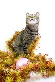Interested cat in a tinsel. Look up Royalty Free Stock Image