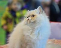 The interested kitten stock photo