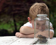 Interesting. A little boy examining two toads in a jar Stock Photography