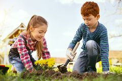 Cheerful positive girl planting flowers. Interesting activity. Cheerful positive girl planting flowers while being together with her brother royalty free stock images