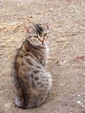 Interesting and beautiful cat pictures suitable for advertisements and designs. 2 Royalty Free Stock Photography