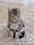 Interesting and beautiful cat pictures suitable for advertisements and designs. 5 Royalty Free Stock Photography