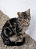 Interesting and beautiful street cat pictures suitable for advertising and designs. 2 Royalty Free Stock Photos